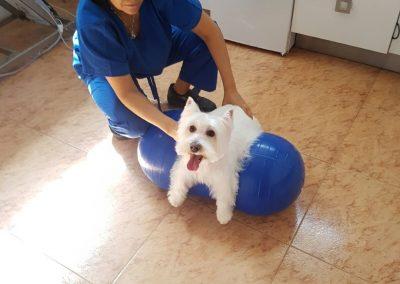 fisioterapia-3